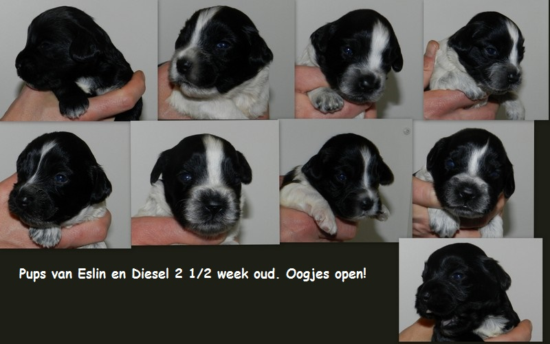 collage pups Eslin en Diesel